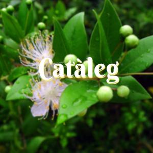Catàleg