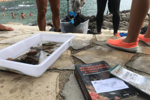 Snorkel Botànic 2021 | Jardí Botànic Marimurtra