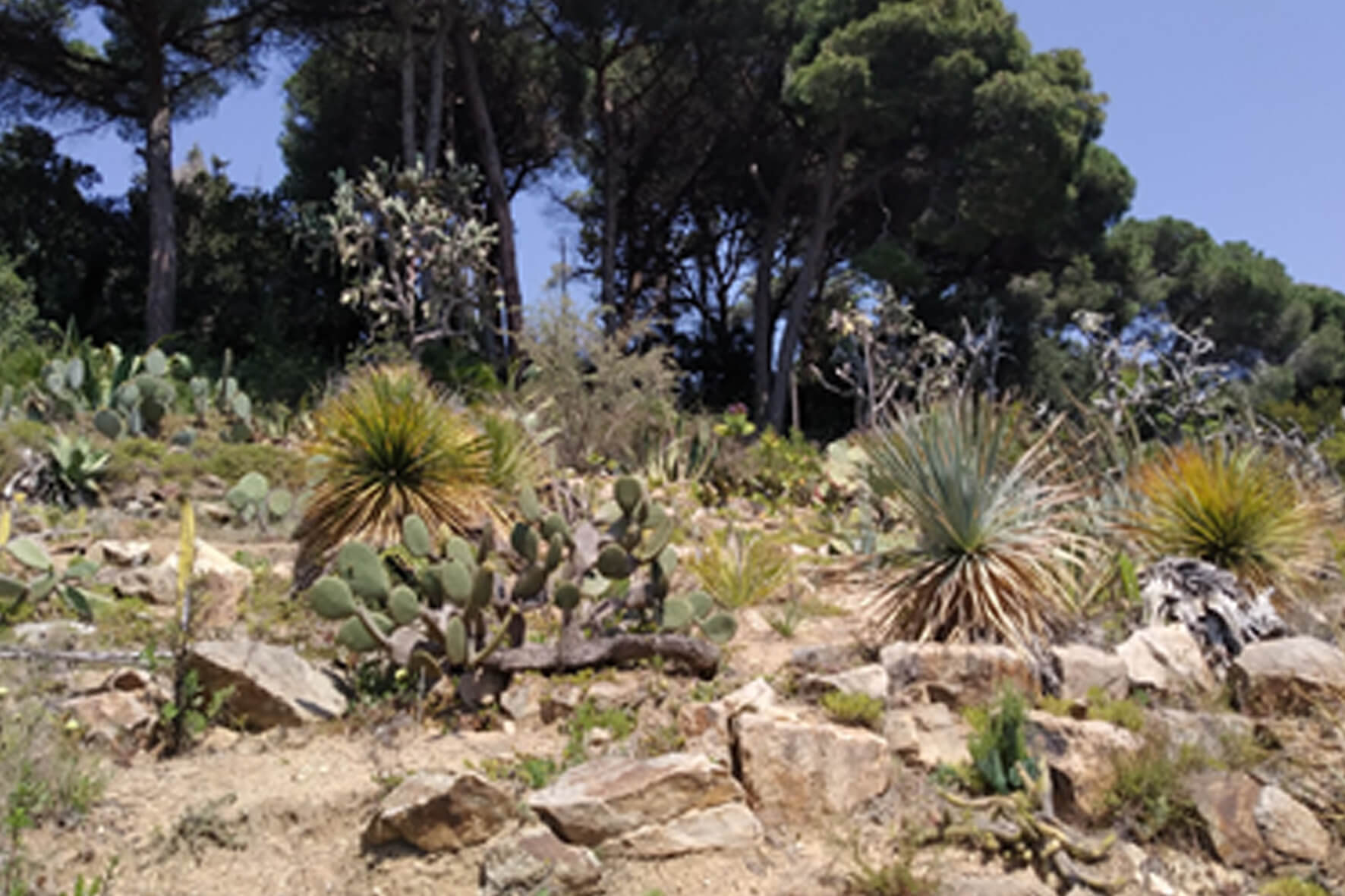 Flora Perú | Fundraising | Jardí Botànic Marimurtra